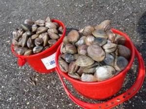 茨城の潮干狩りおすすめスポットや穴場と潮見表!