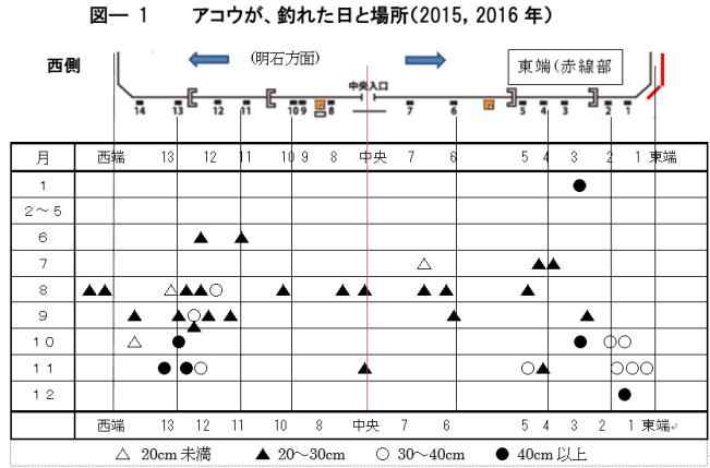 図ー1 アコウが釣れた日と場所(2015、2016年)