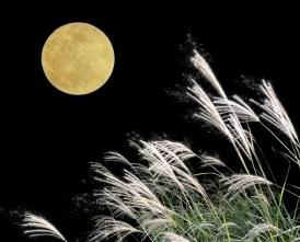 お月見 献立