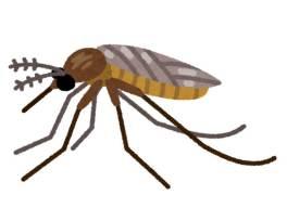 蚊 飛べる高さ