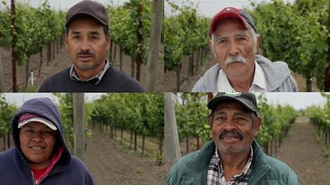 Mindful-Vineyards