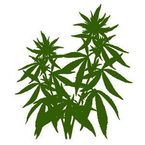 Skagit Organics +21 Recreational Cannabis Company Skagit Valley