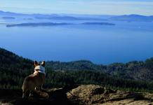 Skagit County Dogs Oyster Dome