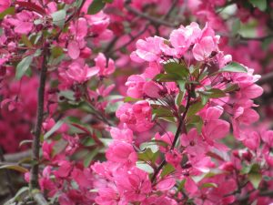 Skagit County Walks to See Spring Blooms Edgewater