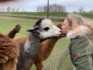 Alpaca Farm Mount Vernon Ruth-Gets-a-Kiss