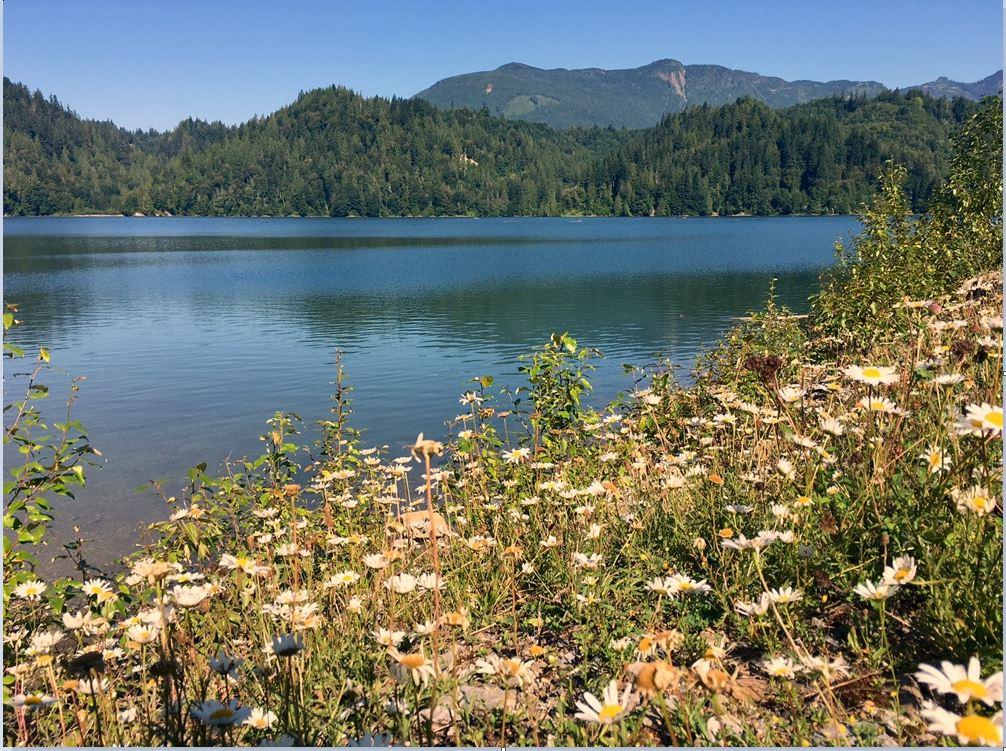 Puget Sound Energy lake shannon