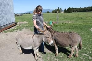 JF-Mini-Donkey-Ranch-In-Pairs