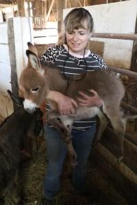 JF-Mini-Donkey-Ranch-Mojito