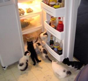 Anacortes-Animal-Relief-Fund-kittens-in-the-fridge