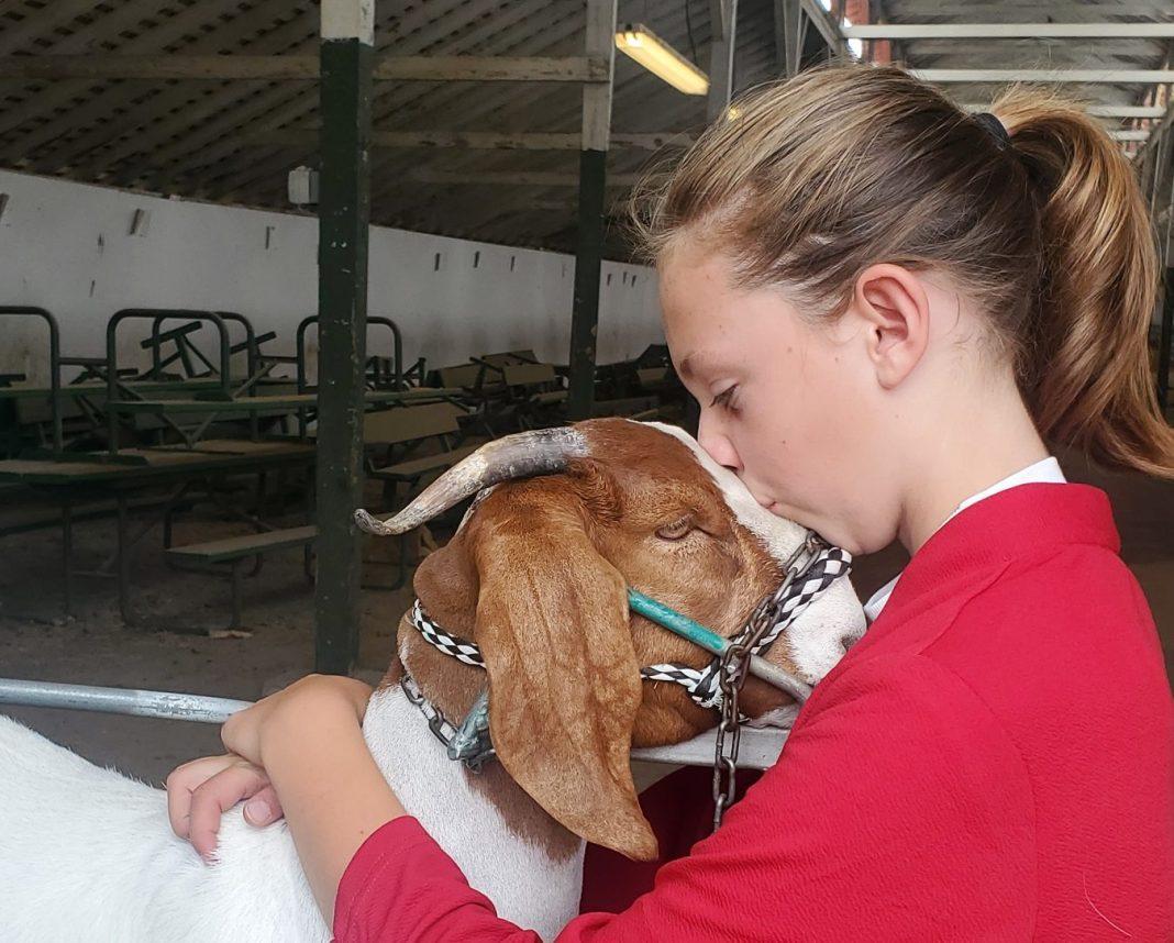 Skagit County Fair 4H Jaelynn VanValkenburg love