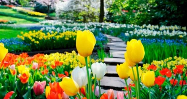 Ако искате цветята в градината и на прозорците да цъфтят като луди