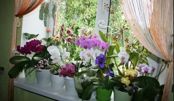 Ей така ми е первазът през цялата година! Най-добрата домашна тор за орхидеи: Опитайте!