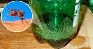 Вземате 1 пластмасова бутилка и за 5 минути имате най-ефикасния капан за комари! Залагате го вечерта, а на сутринта броите жертвите