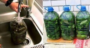 Рецепта за кисели краставички която става любима! Хрупкави и свежи – а стават толкова лесно!
