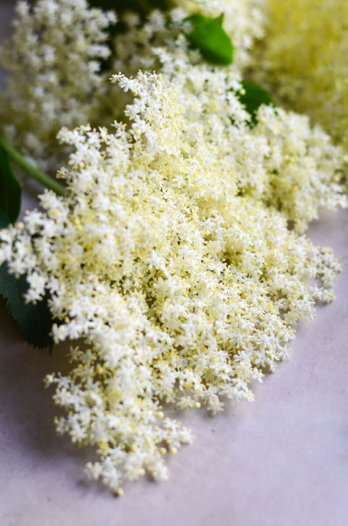 seivamedzio ziedu sirupas skanios dienos (2)
