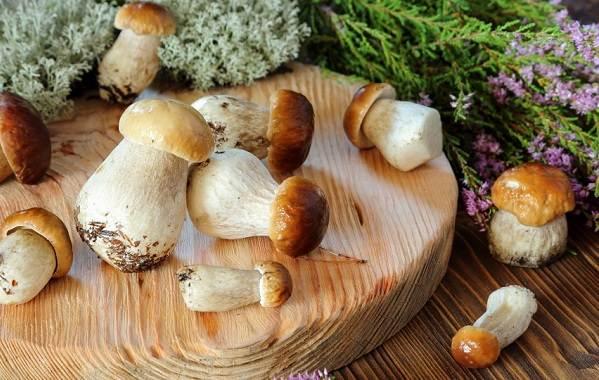 Грибы-Полезные-свойства-грибов-2