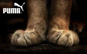 Puma-Пума-история-великого-спортивного-бренда-4