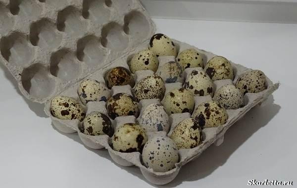 Перепелиные-яйца-Особенности-полезные-свойства-и-как-правильно-приготовить-4