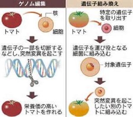ゲノム編集と遺伝子組み換え