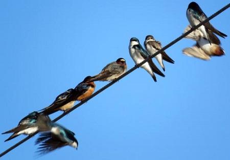電線に止まった鳥