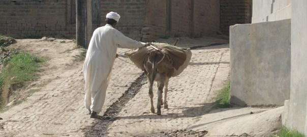 Младший брат идет к старшему с ослом, груженым мешком овса
