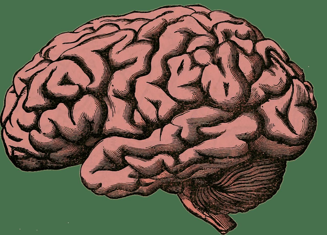 Мозг и совесть
