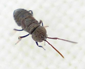 Wasp Indet