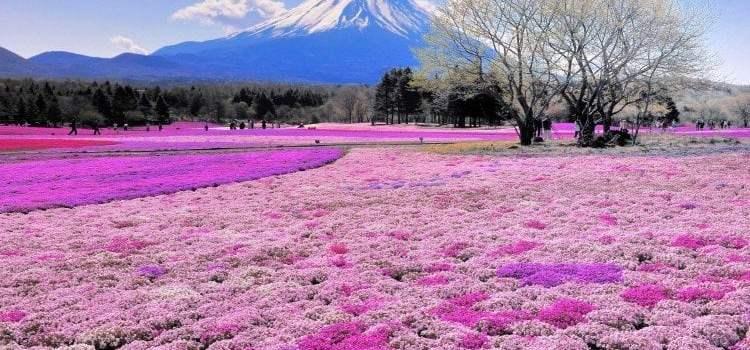Como sobreviver aos insetos e mosquitos do Japão?