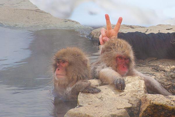 Qual a melhor época para visitar o Japão? - onsen macacos 4