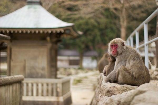 Você conhece beppu? A cidade dos onsen?
