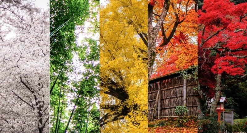 As 11 temporadas / estações / épocas japonesas