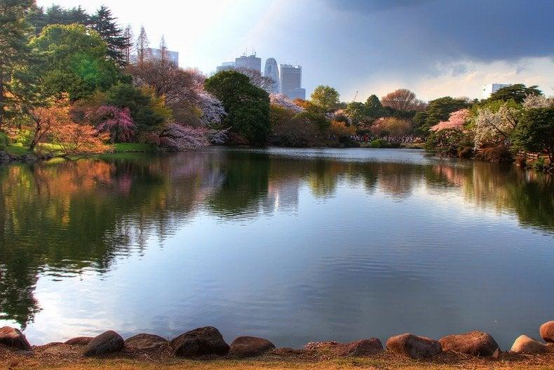 Tokyo - Curiosidades e Guia Completo - shinjuku gyoen parque 8