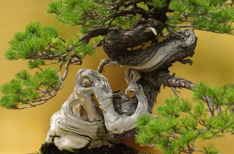 Bonsai - Árvores em miniatura - bonsai arvore 2