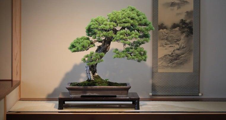 Bonsai - Árvores em miniatura - bonsai arvores japonesas 1