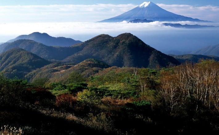 4. fuji.forest