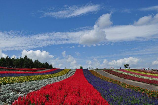 Biei - Um dos cenários mais bonito do Japão 1