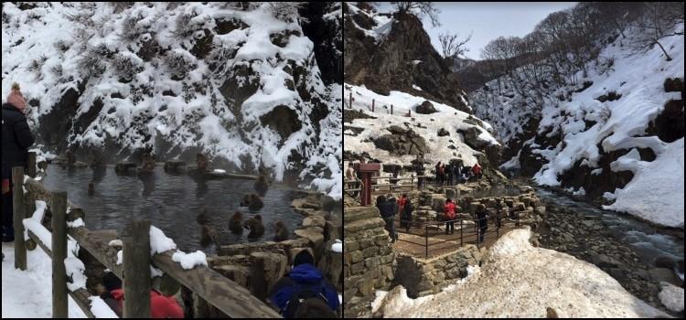 Parque Jigokudani - O onsen dos macacos 1