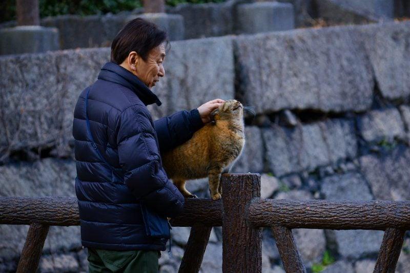 Diferenças entre o cérebro e pensamento japonês e ocidental