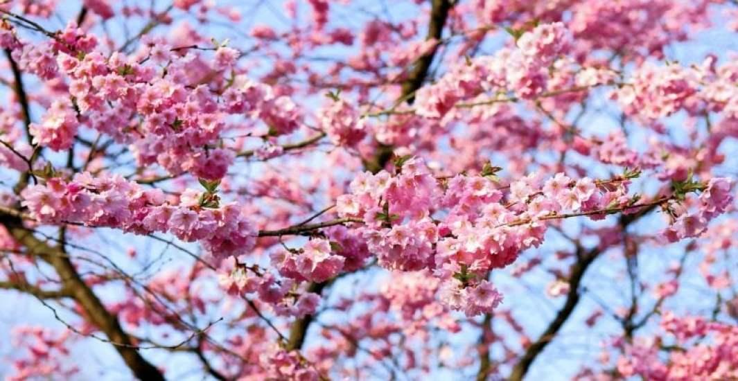 どんな – donna – pronome utilizado no japonês