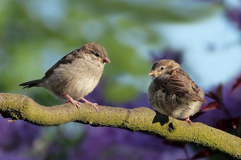 الطيور والطيور باللغة اليابانية