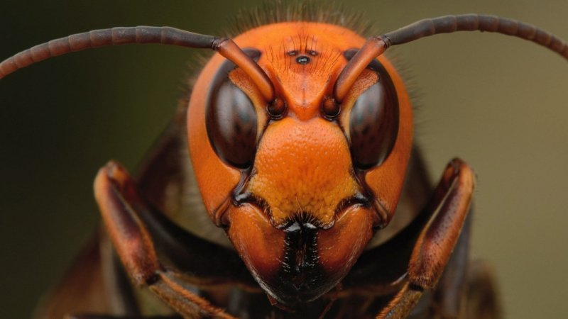 Vespa mandarina - As vespas gigantes do Japão