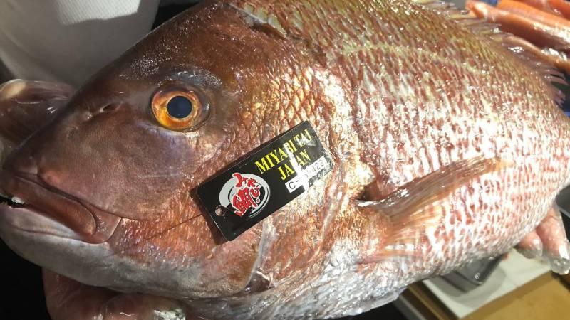 Os 10 Tipos de peixes mais consumidos no Japão - pargo 7