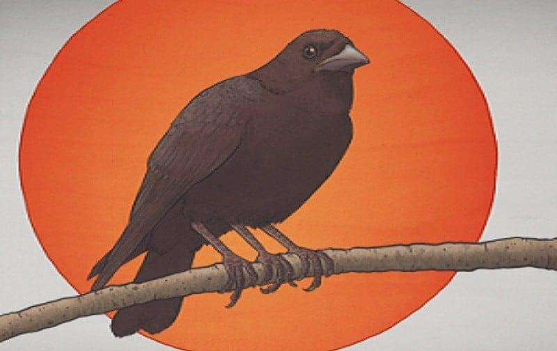 Karasu – simbologia do corvo no japão