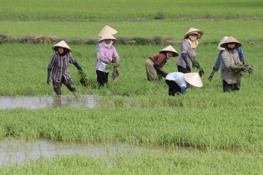 Mulheres no trabalho em um país patriarcal - image 1