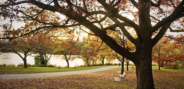 Toronto wants to prune tree bylaws