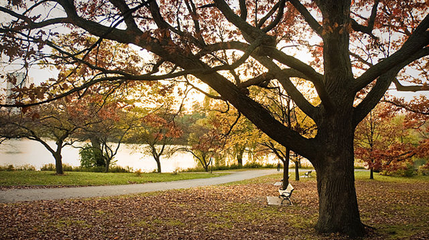 Toronto wants to prune tree bylaws
