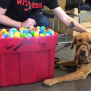 Therapy dog joins Humber