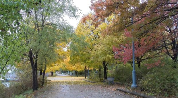 Exhibit shows Sam Smith Park's natural beauty