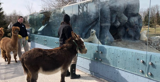 #ClosedButStillCaring: How the Toronto Zoo is dealing with the COVID-19 crisis