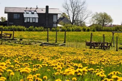 Det gule forår